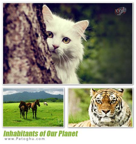 دانلود مجموعه 60 پس زمینه از حیوانات - Inhabitants of Our Planet