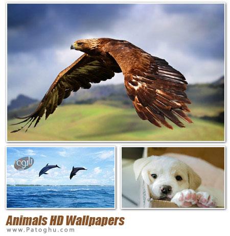 مجموعه پس زمینه دسکتاپ زیبا و با کیفیت HD از حیوانات - Animals HD Wallpapers