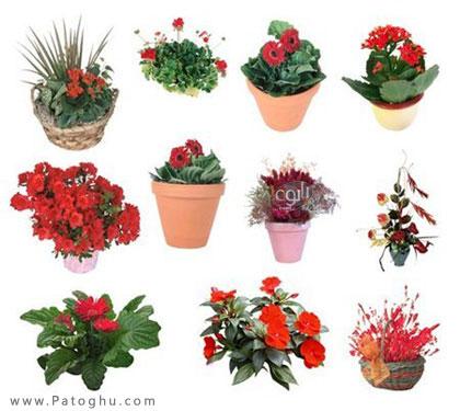 مجموعه تصاویر لایه باز زیبا از گل ها برای فتوشاپ   PSD