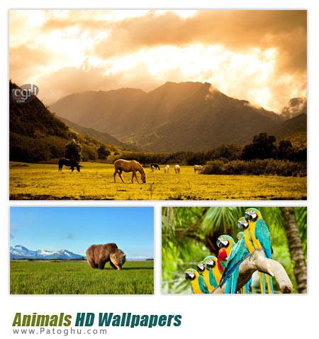 دانلود مجموعه ۵۰ پس زمینه با کیفیت از حیوانات Animals HD Wallpapers