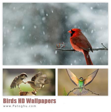 دانلود مجموعه پس زمینه زیبا با موضوع پرنده ها Birds HD Wallpapers