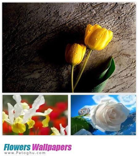 دانلود مجموعه والپیپر زیبا از گل ها Flowers Wallpapers