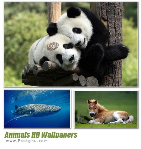 دانلود مجموعه تصاویر پس زمینه از حیوانات با کیفیت بالا - Animals HD Wallpapers