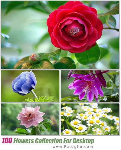 دانلود مجموعه والپیپر با کیفیت از گل های زیبا Flowers Collection For Desktop