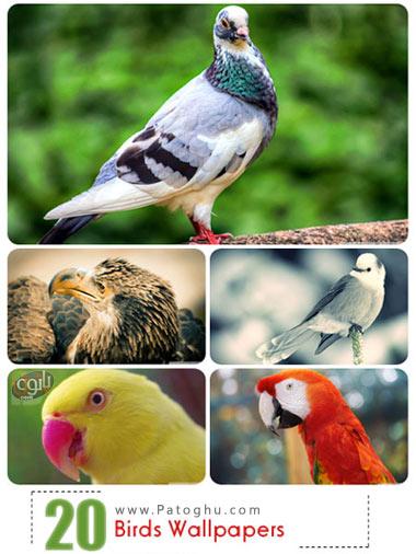 دانلود والپیپرهای زیبای دسکتاپ از پرندگان زیبا