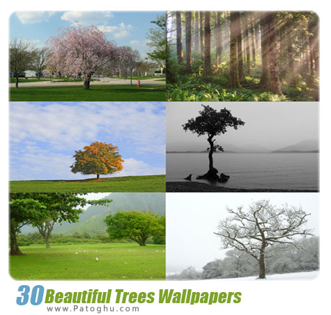 دانلود مجموعه 30 والپیپر با کیفیت از درختان - Beautiful Trees Wallpapers