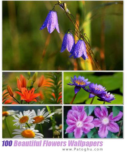 مجموعه والپیپر با کیفیت از گل های زیبا برای دسکتاپ