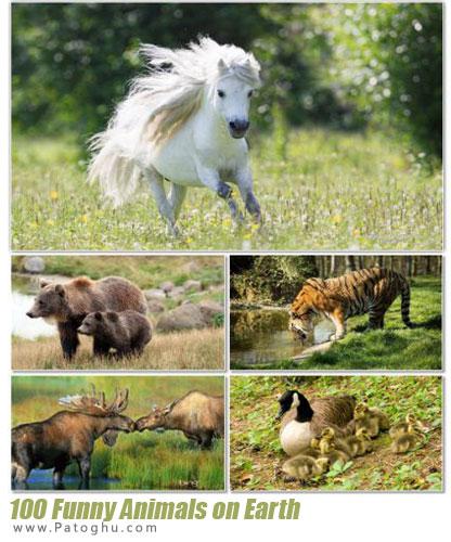 مجموعه بی نظیر تصاویر با کیفیت و جالب تصاویر حیوانات برای دسکتاپ Funny Animals on Earth