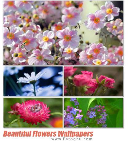 مجموعه 100 والپیپر با کیفیت بالا از گل ها Beautiful Flowers Wallpapers