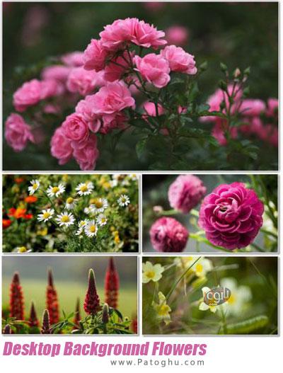 دانلود مجموعه والپیپر با کیفیت از گل ها برای دسکتاپ Desktop Background Flowers Collection