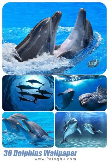 دانلود تصاویر پس زمینه از دلفین ها برای دسکتاپ Dolphins Wallpaper pack