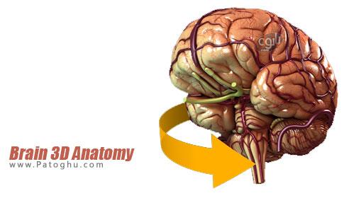 نرم افزار Brain 3D Anatomy