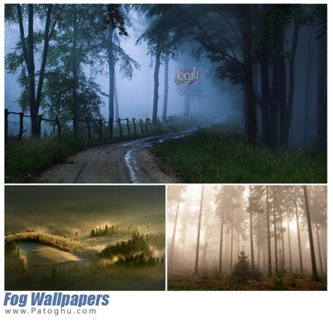 مجموعه تصاویر با کیفیت جنگل برای پس زمینه دسکتاپ Fog Wallpapers
