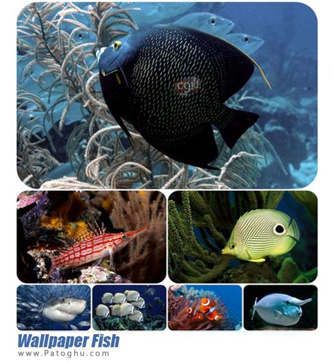 مجموعه عکس از ماهی ها برای پس زمینه دسکتاپ Wallpaper Fish