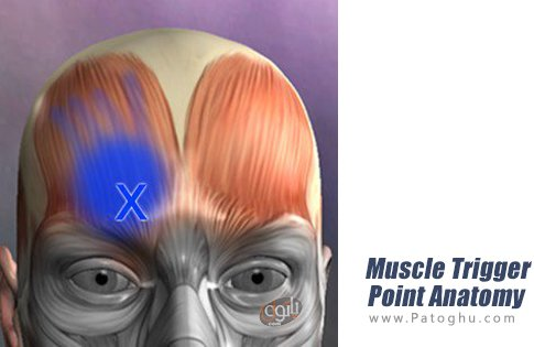 دانلود Muscle Trigger Point Anatomy