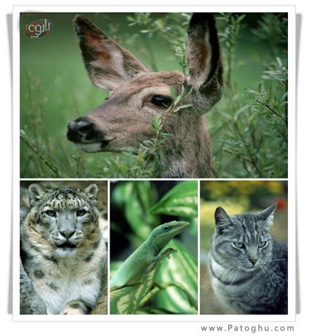 دانلود مجموعه عکس حیوانات با کیفیت بالا