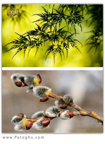 مجموعه عکس های زیبا و باکیفیت با موضوع طبیعت برای دسکتاپ