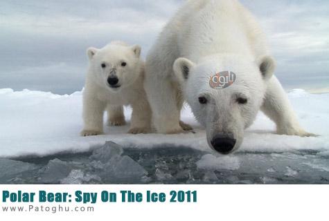 دانلود مستند خرس قطبی Polar Bear: Spy On The Ice 2011