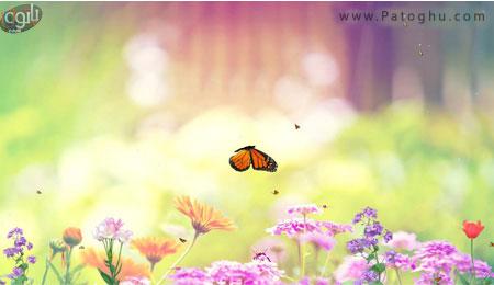 دانلود اسکین سیور زیبا با نام Butterfly Paradise Screensaver