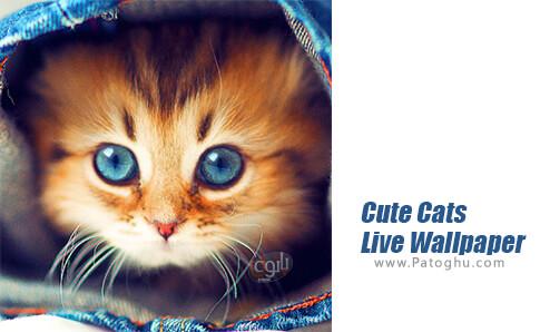 دانلود Cute Cats Live Wallpaper برای اندروید
